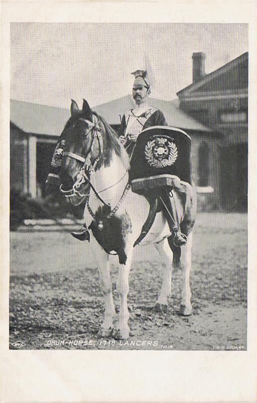 Drum-Horse, 17th Lancers