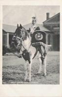 14  -  Drum-Horse, 17th Lancers