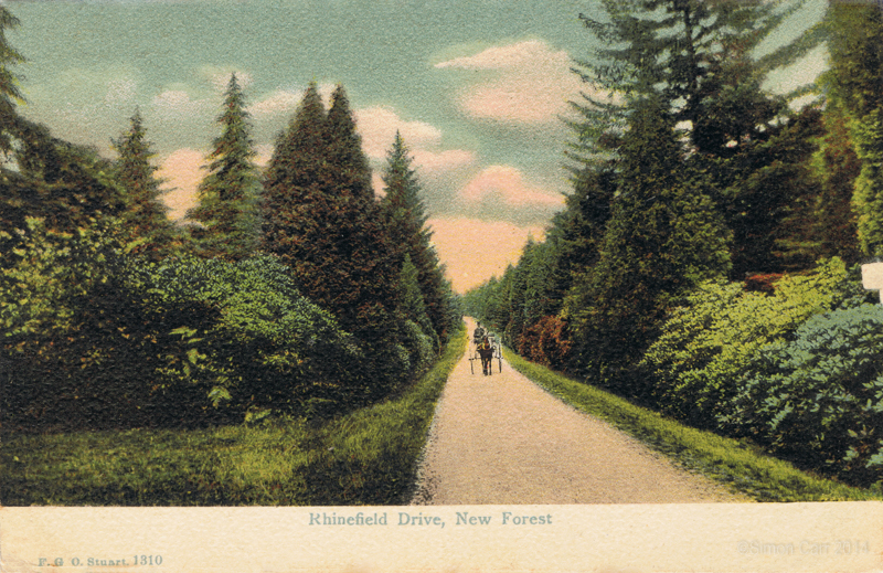 Rhinefield Drive, New Forest