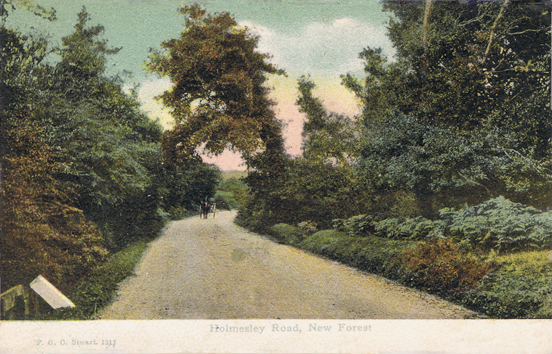 Holmesley Road, New Forest