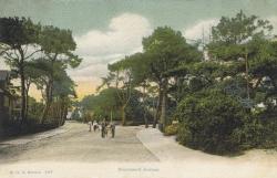 1427  -  Stourwood Avenue