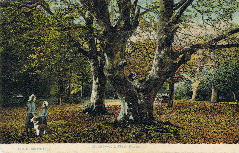 Boldrewood, New Forest