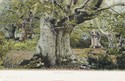 391  -  Burnham Beeches