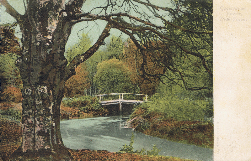 Queenwood Bower, New Forest