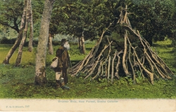 797  -  Brusher Mills, New Forest Snake Catcher