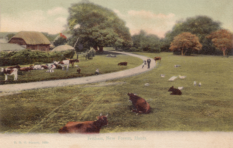 Fritham, New Forest, Hants