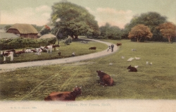 1029  -  Fritham, New Forest, Hants