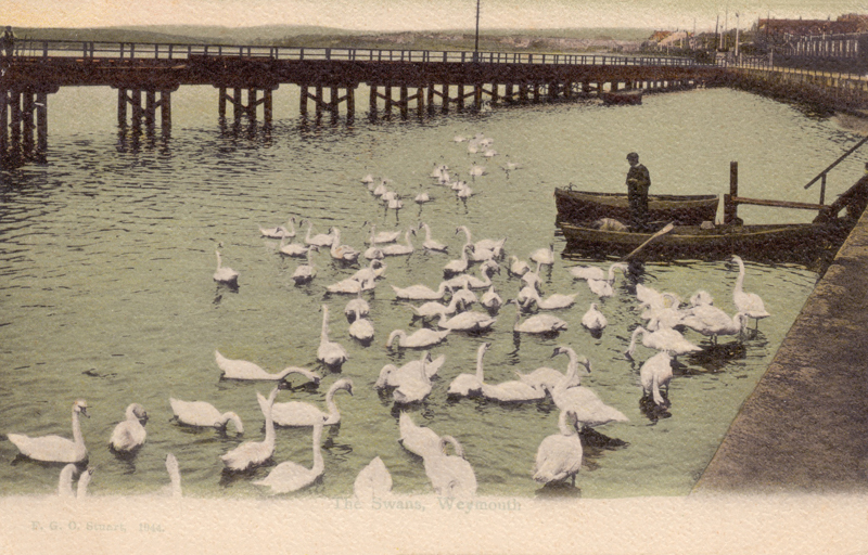 The Swans, Weymouth