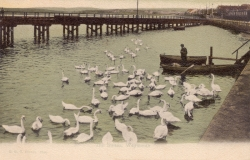 1044  -  The Swans, Weymouth