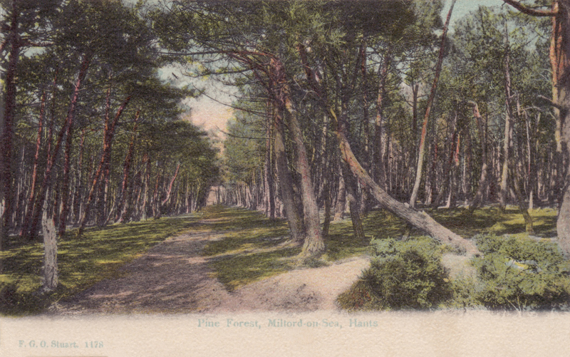Pine Forest, Milford-on-Sea, Hants