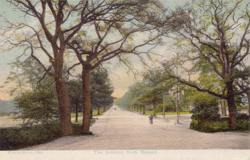 The Avenue from Basset