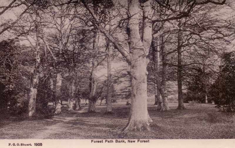 Forest Path Bank, New Forest