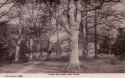 1905  -  Forest Path Bank, New Forest