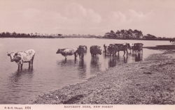 1974  -  Hatchett Pond, New Forest