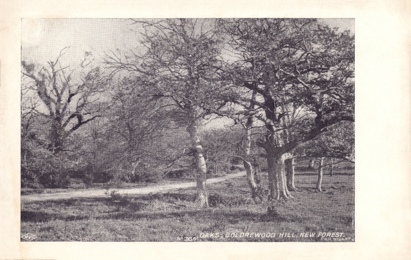 Oaks, Boldrewood Hill, New Forest