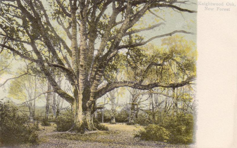 897  -  Knightwood Oak, New Forest