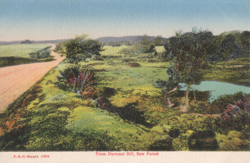 From Durmast Hill, New Forest